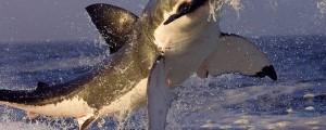 Evitare di essere mangiati dagli squali